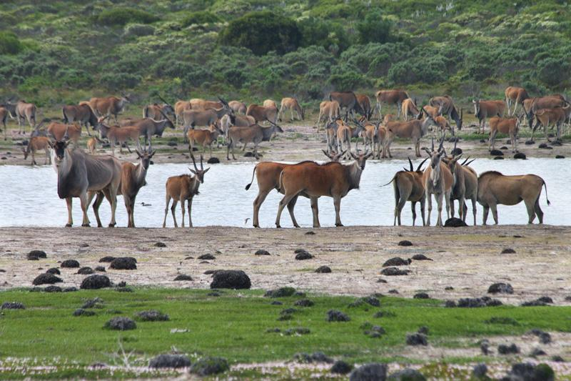 elands de hoop nature reserve